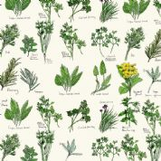 Inprint Chelsea Physic Garden - 4051 - Named Herbs - White - 8951 Q30 - Cotton Fabric